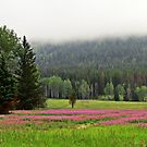 Pink Carpet by Olga