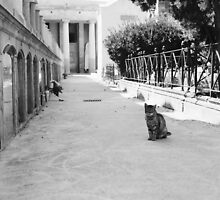 Cat in Poblenou Cemetery by Indea Vanmerllin