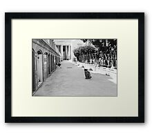 Cat in Poblenou Cemetery Framed Print