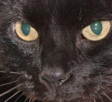 The black cat Sticker