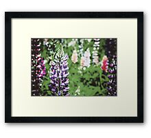 Purple And Pink Snapdragon Flowers In Spring Framed Print