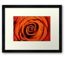 Wet Red Rose Close Up With Water Drops Framed Print