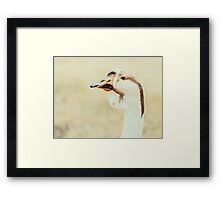 Domestic Farm Goose Portrait Framed Print
