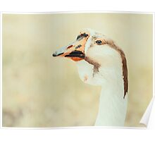 Domestic Farm Goose Portrait Poster