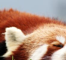 Sleeping Red Panda Sticker