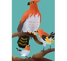 Fletchling and evolutions Photographic Print