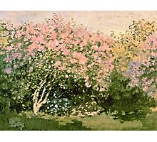Claude Monet - Lilac In The Sun 1873  Photographic Print