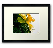 Nature - Plant 02 Framed Print