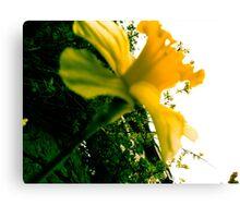Nature - Plant 02 Canvas Print