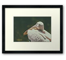 Wild White Pelican Bird Portrait Framed Print