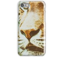 Wild Young Tiger (Panthera Tigris) Portrait iPhone Case/Skin