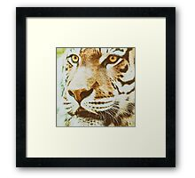 Wild Young Tiger (Panthera Tigris) Portrait Framed Print