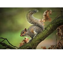 Tails Up! Photographic Print
