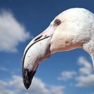 flamingo stare by globeboater
