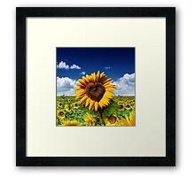 Sunflower Heart Framed Print