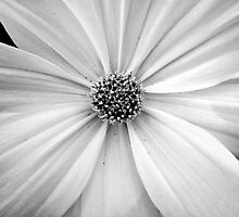 B&W Flower by Bob Wall