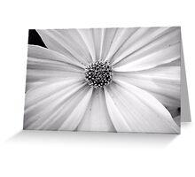 B&W Flower Greeting Card