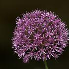 Purple sensation by Thea 65