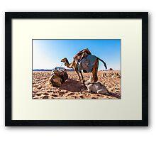 Dromedary camels in Wadi Rum desert, Jordan Framed Print