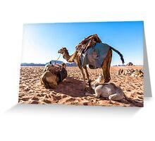 Dromedary camels in Wadi Rum desert, Jordan Greeting Card