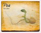 Pea by Nigel Bangert