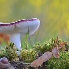Russula undulata  by relayer51