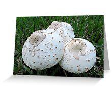 Fungus Trio Greeting Card