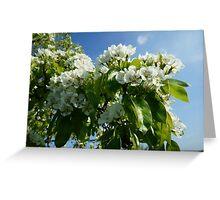 Pear Blossom  Greeting Card