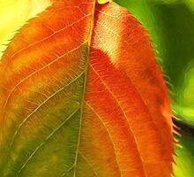 Autumn Leaf Impressions by Susie Peek