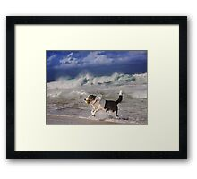 Dogs with game face on .40 Framed Print