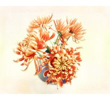 Colorful Red and Yellow Mums Still Life Photographic Print