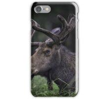 Hiding in Plain Sight  iPhone Case/Skin