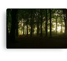 Foggy Woodland Canvas Print