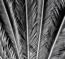 Our Feathered Fronds by Bob Wall