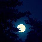 Moonlit Night   ^ by ctheworld