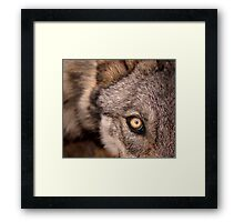 The Young Wolf's Gaze Framed Print