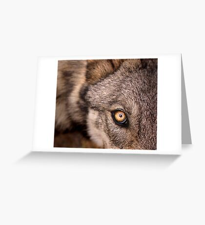 The Young Wolf's Gaze Greeting Card