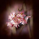 Spring Secret by Marilyn Cornwell