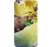 END OF SUMMER ROSE 052 iPhone Case/Skin