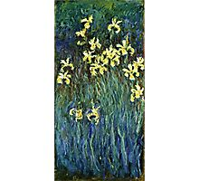 Claude Monet - Yellow Irises ( 1914 -  1917)  Photographic Print