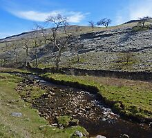 Ingleborough Walk - I by Kat Simmons