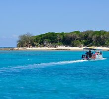 Lady Musgrave Island by Lisa Williams
