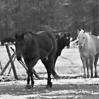 Winter Horses by Sonja Dover