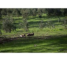 Kangaroos Eltham Victoria Australia 20160802 7263  Photographic Print