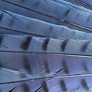 Tail Feathers by Martha Medford