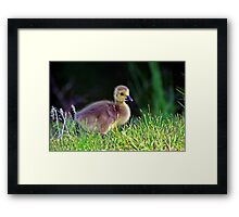 new beginnings...  Framed Print