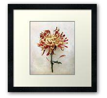 Portrait of a Mum in Red and Gold Framed Print