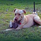 Maci With Her Treasures in the Yard by WeeZie