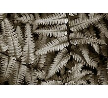 Silvery Ferns Photographic Print