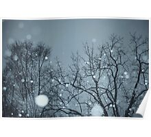 Snowy Winter Morning Poster